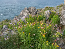Little Flowers Next To Cliffs By The Sea