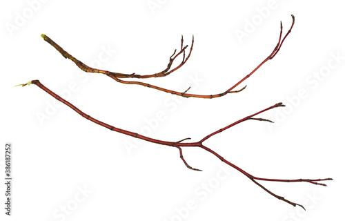 Fotografia Set of dry  red twigs