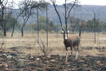 Photo Taken In Lion And Safaripark, Broederstroom, South Africa.