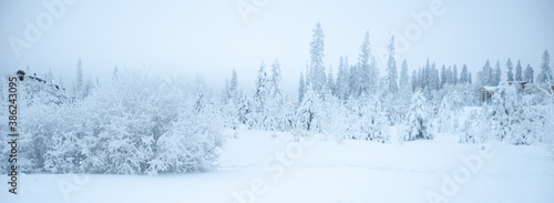 Fabulous winter landscape, trees in the snow, cold, snowy winter #386243095