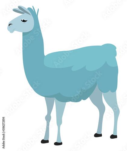 Naklejka premium Blue lama, illustration, vector on white background