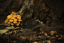 Inedible Poisonous Mushrooms I...