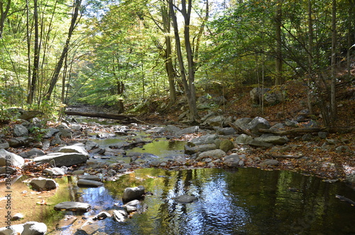 Tela stream or creek in forest with rocks and trees