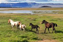 Horses On Lago Argentino In El Calafate, Patagonia, Argentina