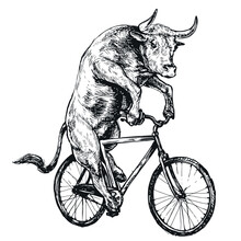 Bull Rides A Bicycle Engraving...