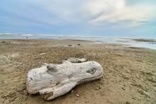 Driftwood On The Beach, Photo ...