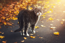A Stray Gray Cat Walks On A Su...