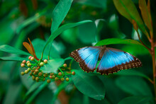 Beautiful Blue Butterfly Sit In A Bush