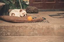 French Bulldog Puppy Sleeping ...