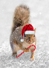 Squirrel Santa. Cute Squirrel ...