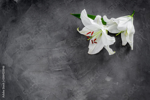 Fotografering Lily funeral flower on dark stone