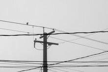 Single Crow Perches On A Power...