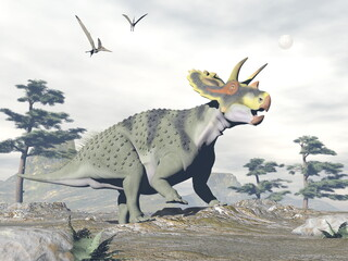 Anchiceratops dinosaur walk in the nature by grey day - 3D render