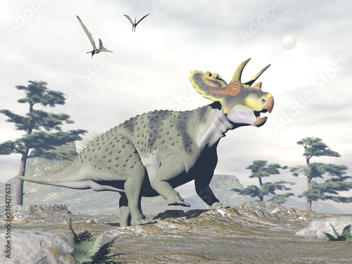 Obraz Anchiceratops dinosaur walk in the nature by grey day - 3D render - fototapety do salonu