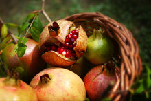 Frutti Di Melograno Appena Raccolti In Un Cesto; Dettagli In Primo Piano