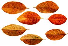 Leaves In The Garden On White ...