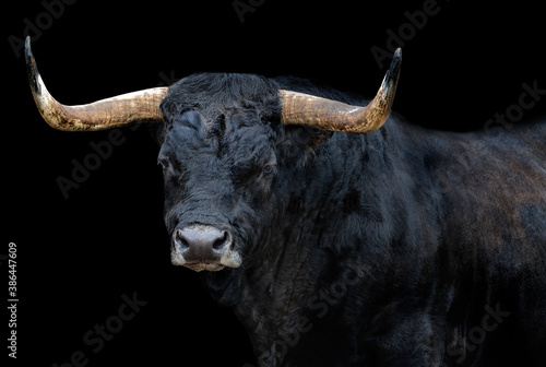 Carta da parati Portrait of a bull with black background