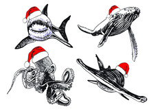 Graphical  Set Of Sea Habitants In Santa Claus Hats Isolated On White, Vector New Year Illustration