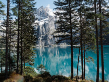 View Of Alpine Lake With Mountains And Pine Trees, Oeschinensee, Switzerland
