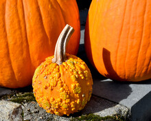 A Small Warty Pumpkin With Two...