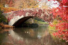 Stone Bridge In Central Park C...