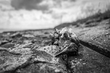 A Dead Bird At The Beach Of Wilhelmshaven