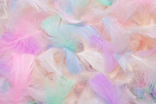 Colorful Feather Background, T...