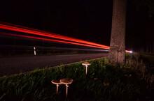Pilz Nächtlicher Straßenrand
