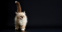 Funny Kitten With Bright Blue ...