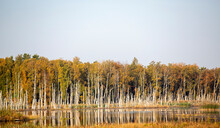 Autumnal Forest Landscape In F...