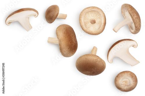 Obraz na plátně Fresh Shiitake mushroom isolated on white background with clipping path