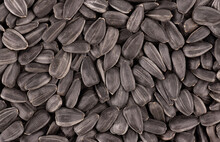 Sunflower Seeds Background. Pi...