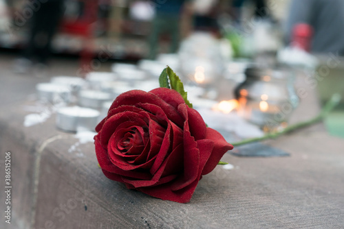 Fotografiet closeup of red rose and candles in the street in memory of the   professor of hi