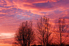 Three Bare Trees Silhouetted A...
