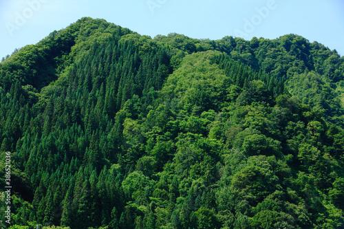 人工林と自然林
