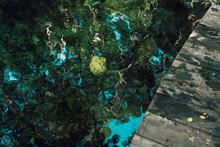 Vistas De Un Cenote Exterior En El Caribe Mexicano, Tulum