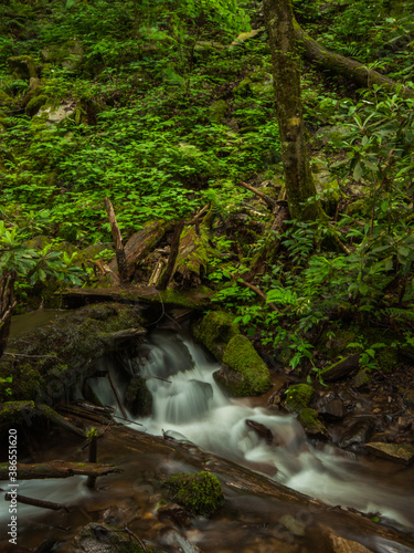 Fototapety, obrazy: waterfall in the forest moving
