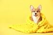 Leinwandbild Motiv Cute dog with warm blanket on color background