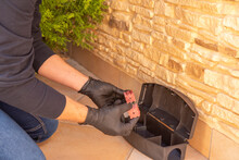 Professional Preparing Trap For Rats, Mice, For Pest Control