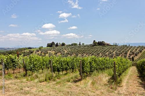 Naklejka premium vineyard in Chianti region country, Tuscany