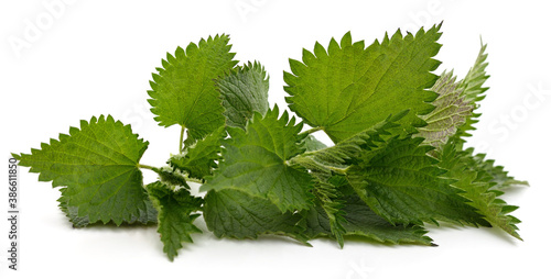 Fotografering Green nettle bush.