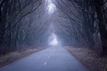 Road In Mist Forest