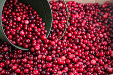 Ripe Fresh Cranberries With A Green Little Bucket As Natural, Food, Berries Background. Selective Focus.