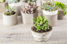 Collection Of Succulents On A Light Colored Table, Close-up Image