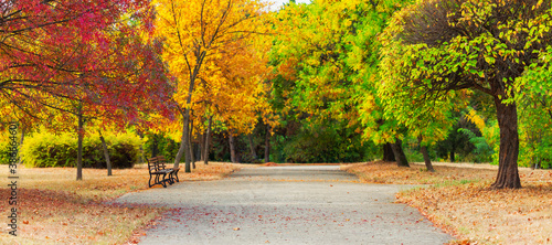 Obraz Beautiful trees in fall colors. Autumn landcape in a city park. - fototapety do salonu