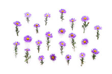 Flowers Wild Violet Asters Wit...