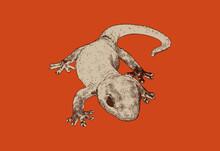 Engraving House Gecko Lizard Illustration Isolated On Red Orange BG