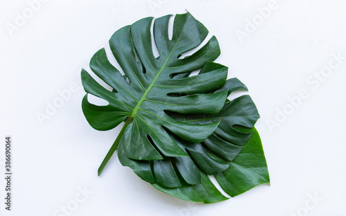 Fototapety, obrazy: Beautiful Green Monstera Leaves On a white background isolated