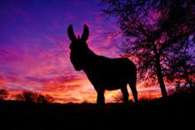 Mini Donkey Silhouette With Su...