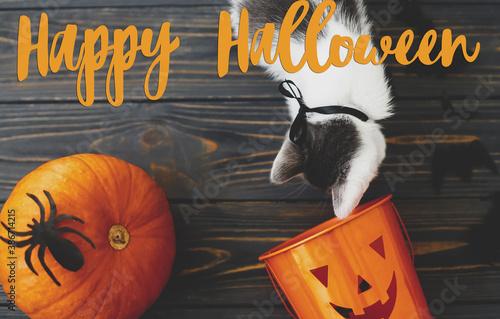 Fototapeta Happy Halloween text on cute kitten playing at Jack o lantern candy bucket, pumpkin and bats on dark background, celebrating halloween at home. Handwritten sign, seasonal greeting card obraz
